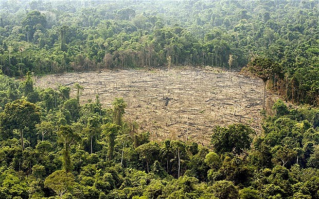 Animals in danger of extinction because of deforestation